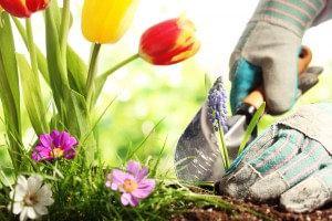 Hovenier in tuin aan het werk